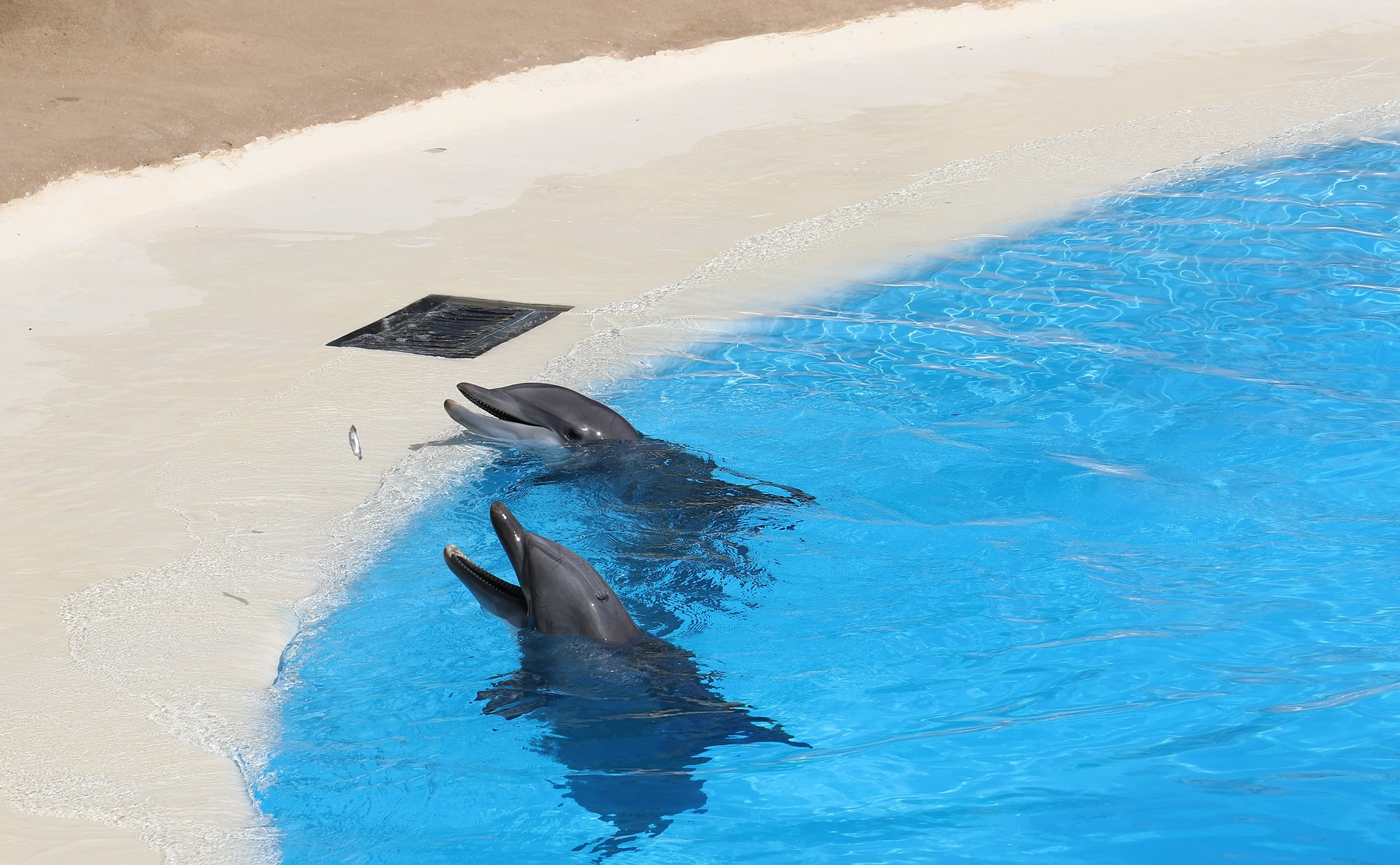 Dolphins at a dolphinarium: stress in captive dolphins