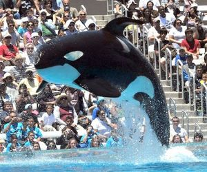 Sumar: Orca Deaths In Captivity