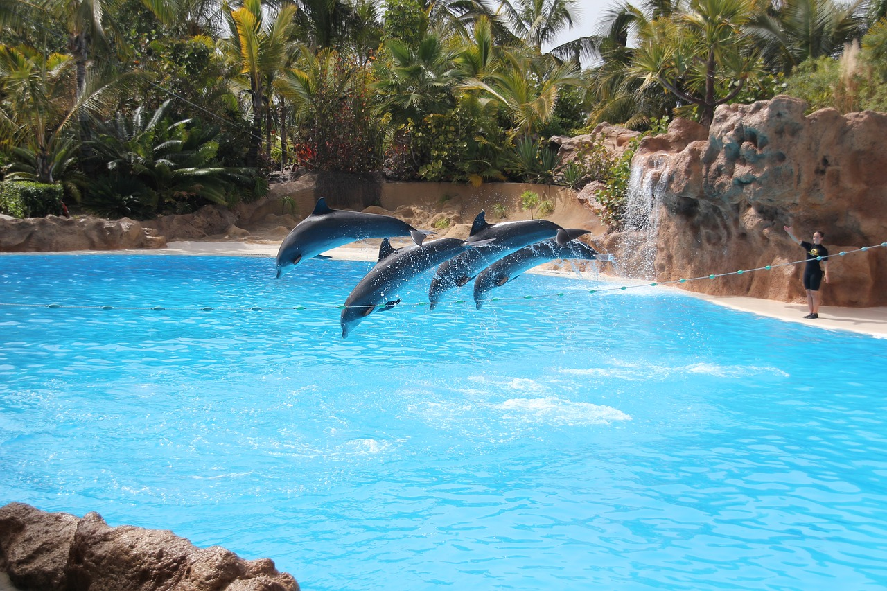 Dolphins On Display At Loro Parque, Tenerife, Spain: Facts about The Dolphin Captivity Industry